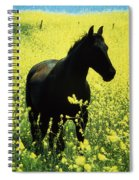 County Tipperary, Ireland Horse In A Spiral Notebook