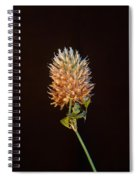 Cover Aglow 1 Spiral Notebook