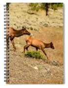 Cow And Calf Elk Spiral Notebook