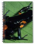 Cowans Mantella Spiral Notebook
