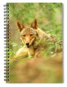 Coyote Caught Napping Spiral Notebook