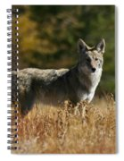 Coyote On A Fall Meadow Spiral Notebook