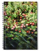 Cranberry Bog Spiral Notebook