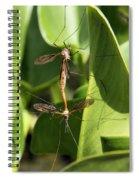 Crane Flies Mating Spiral Notebook