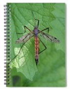Crane Fly Spiral Notebook