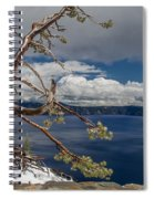 Crater Lake Pine Spiral Notebook