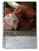 Crazed Look In The Bulls Eye Spiral Notebook