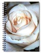 Creamy Rose IIi Spiral Notebook