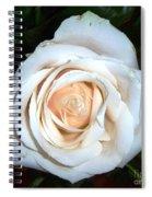 Creamy Rose Iv Spiral Notebook