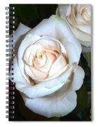 Creamy Roses IIi Spiral Notebook