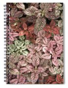 Creative Hues Of Mother Nature Spiral Notebook