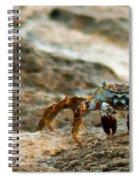 Creeping Spiral Notebook