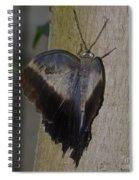 Creeping Tawny Owl Spiral Notebook