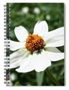 Creeping Zinnia Spiral Notebook