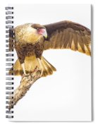 Crested Caracara Taking Off Spiral Notebook