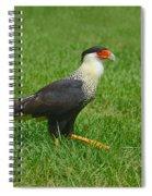Crested Caracara Spiral Notebook