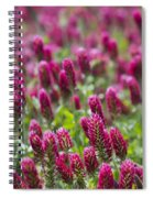 Crimson Clover In All Its Glory Spiral Notebook