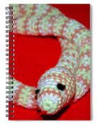 Crochet Snake In Red Spiral Notebook