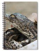 Crocodile And Alligator Breeding Farm  Spiral Notebook