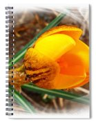 Crocus Gold Two Spiral Notebook
