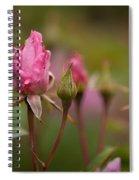 Crown Of Creation Spiral Notebook