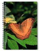 Cruiser Butterfly Spiral Notebook