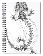 Cryptobranchus, Living Fossil Spiral Notebook