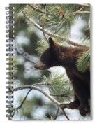 Cub In Tree Spiral Notebook