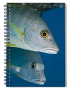Cubera Snappers Spiral Notebook