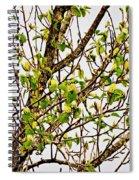 Cucumber Tree Blossoms Spiral Notebook