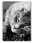 Cuddly Cat Spiral Notebook