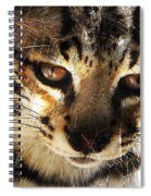 Curious Spiral Notebook