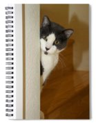 Curious Cat Spiral Notebook
