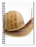 Curious Snail Spiral Notebook