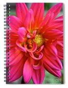 Curly Dahlia Spiral Notebook