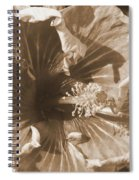 Curly Hibiscus In Sepia Spiral Notebook