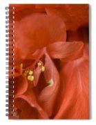 Curly Hibiscus Spiral Notebook