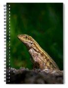 Curlytail Spiral Notebook