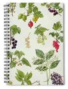 Currants And Berries Spiral Notebook