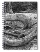 Curved Spiral Notebook