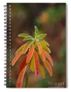 Cushion Spurge Spiral Notebook