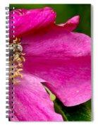 Cutaway Spiral Notebook