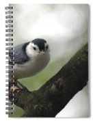 Cute Face Nuthatch Spiral Notebook
