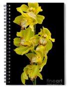 Cymbidium - Boat Orchid Spiral Notebook