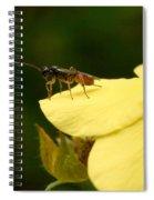 Cynipoidea Spiral Notebook