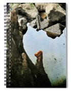 Cypress Knees Spiral Notebook