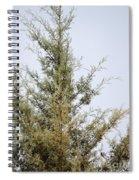 Cypress Spiral Notebook