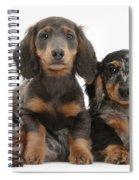 Dachshund And Merle Dachshund Pups Spiral Notebook