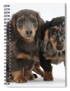 Dachshund Puppies Spiral Notebook