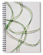 Dacron Fibers Spiral Notebook